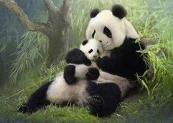 panda mama si pui
