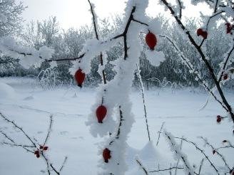 Mariana Ionica - Winter
